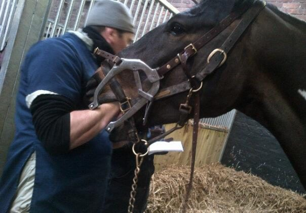 Chris Lee Equine Dental Technician